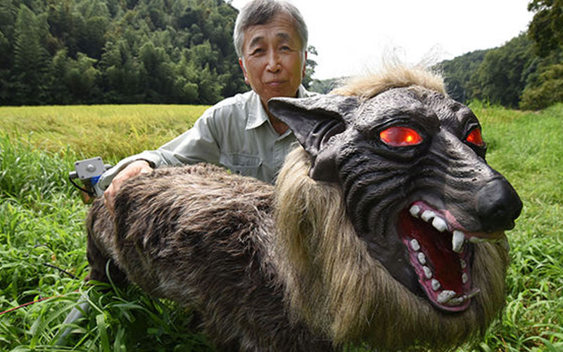 chatter.lksuper-monster-wolf-a-success-in-japan-farming-trials